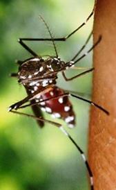 Imagen del dengue